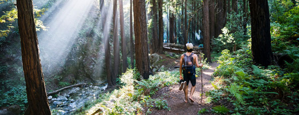 Tree Runner Klettergurt : Hippy tree online shop at sport conrad